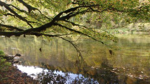 Actualités naturopathiques et naturalistes n°12
