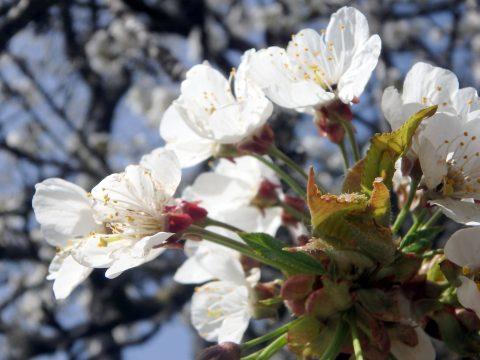 Actualités naturopathiques et naturalistes n°27