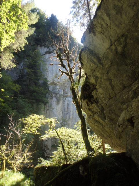 Actualités naturalistes et naturopathiques n°21