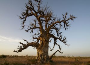 Être un nomade au milieu des grandes steppes du Nord-Sénégal @ Ferlo sénégalais | Linguère | Louga | Sénégal