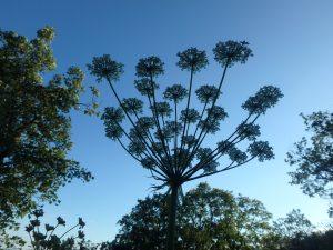 A la rencontre des plantes sauvages @ Jardin botanique Neuchâtel  | Neuchâtel | Neuchâtel | Suisse