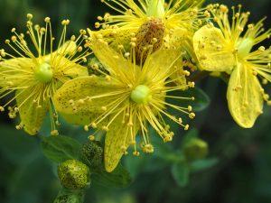 Atelier terre et nature : la santé par les plantes, un savoir à partager. @ Jardin botanique Neuchâtel  | Neuchâtel | Neuchâtel | Suisse