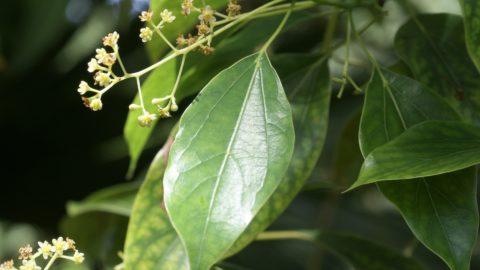 Devenez éco-consommateur de plantes