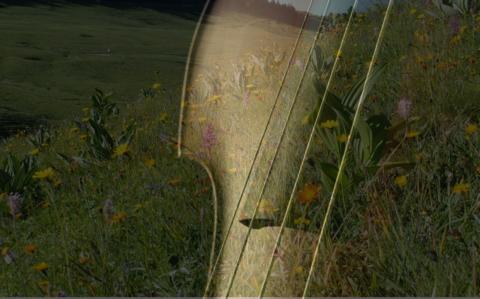 Des fleurs en sol majeur