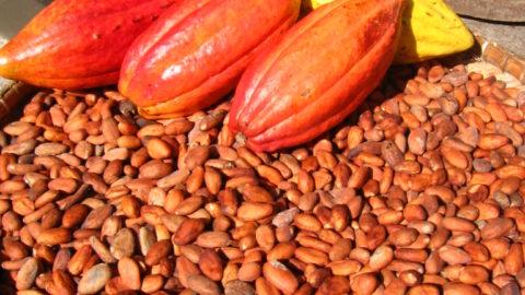 Le cacao avec modération pour la planète et notre santé.
