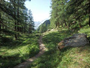 Le chemin des herbes de Bréonna @ La Sage | Valais | Suisse