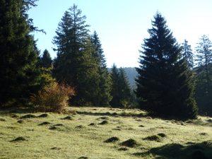 Dans la peau d'un naturaliste-herboriste dans les montagnes neuchâteloises @ Métairie Aarberg  | Villiers | Neuchâtel | Suisse