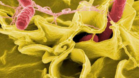 Maladies hivernales : soignons notre immunité par nos intestins (partie 1)