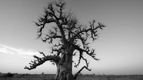 Destination Ferlo, un voyage dans les grandes steppes du nord-Sénégal