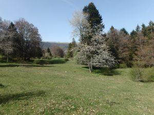 Séjour/stage plantes et nature au Jura Suisse @ Chemin Combe d'Enges | Neuchâtel | Neuchâtel | Suisse