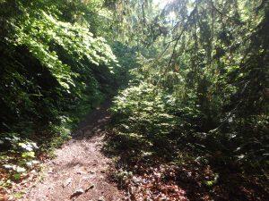 Les remèdes de la forêt de Peseux @ Forêt de Peseux | Peseux | Neuchâtel | Suisse