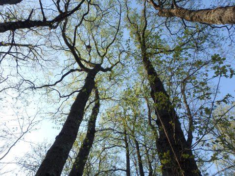 Oserez-vous avoir une «relation intime» avec la nature?