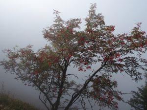 L'arbre de bénédiction