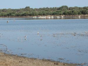 Paysage du lac