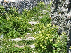 Les vieux sentiers de berger de Tinos