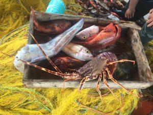 La pêche et les produits de la mer de Tinos